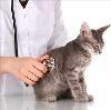 Ветеринарные клиники в Еманжелинске